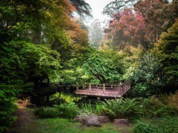 botanical garden wedding at moon viewing garden